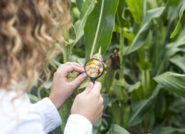 female-agronomist-using-magnifier-to-check-quality-of-corn-crops-in-the-field-scaled-260x188.jpg